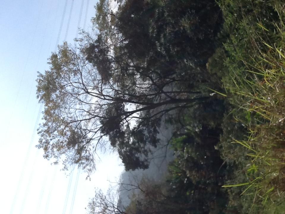 Foto: Conceição Aparecida Santos, Fazenda Santa Maria, 3107/2014