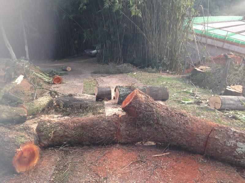 Foto cedida pela proprietária da Chácara